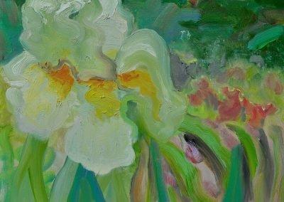 Iris Spring No. 2